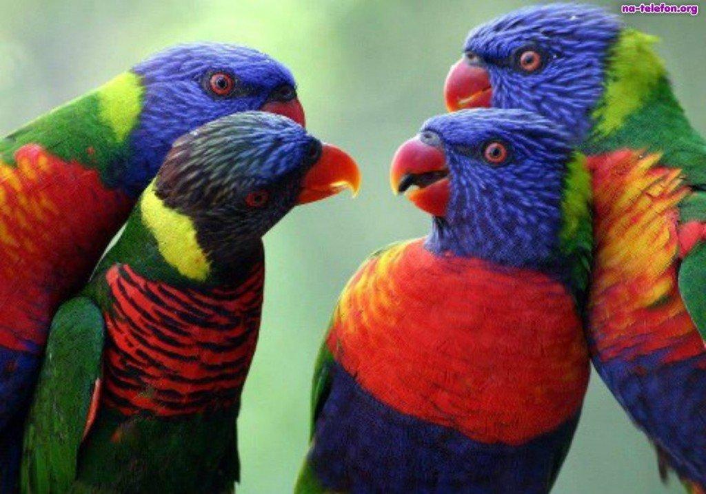 kolorowe-papugi-cztery
